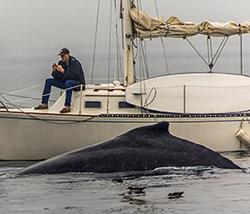 whalewatch