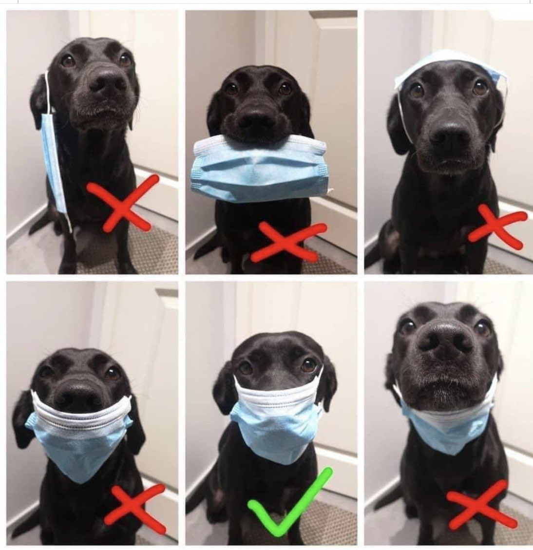 dog wearing masks